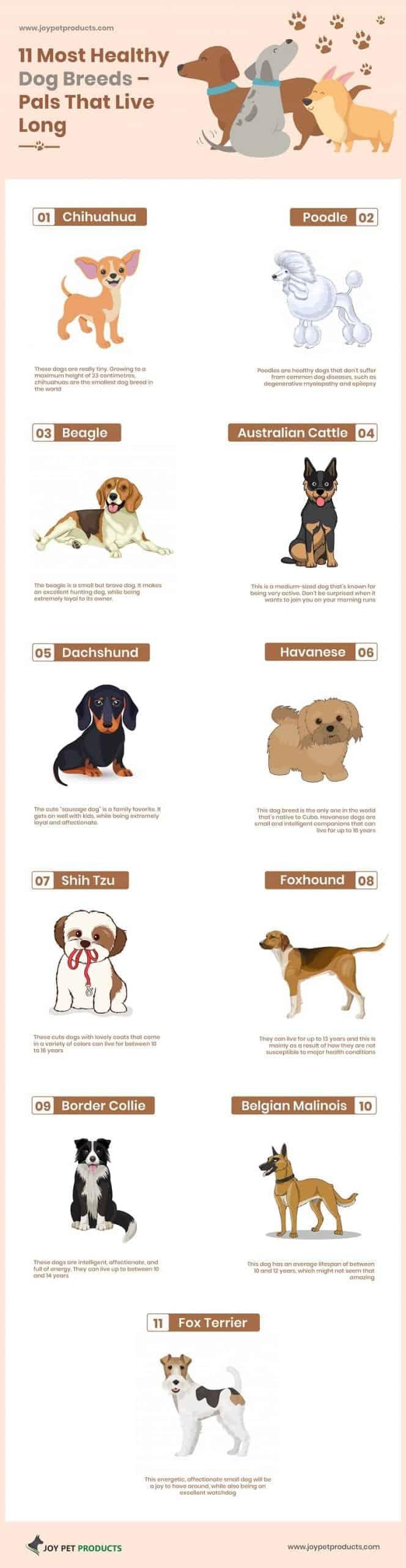 Healthy Dog Breeds