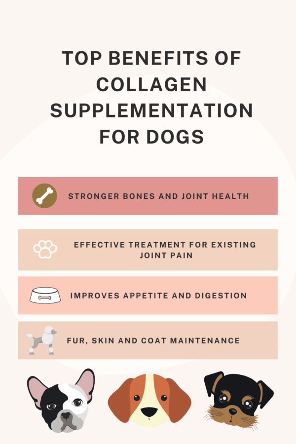 How Much Collagen Should I Give My Dog
