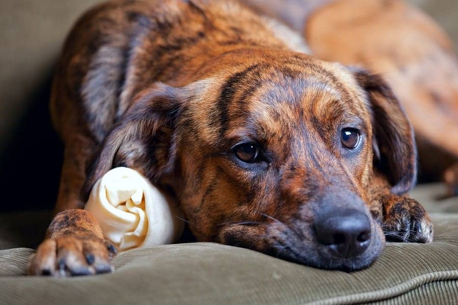 Seven Dog Stomach Noises: When Should You Worry
