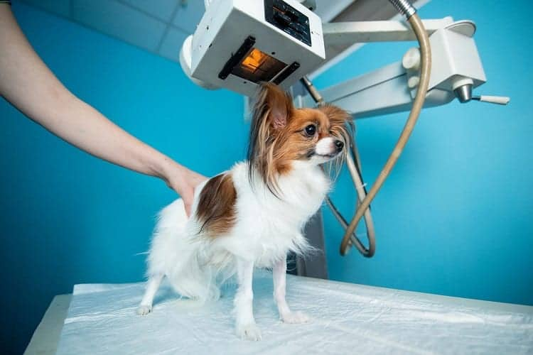 Will Your Dog Need To Be Sedated?