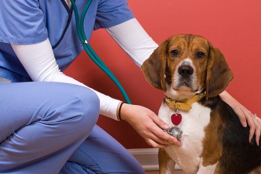 Ultimate Guide To Dog Health