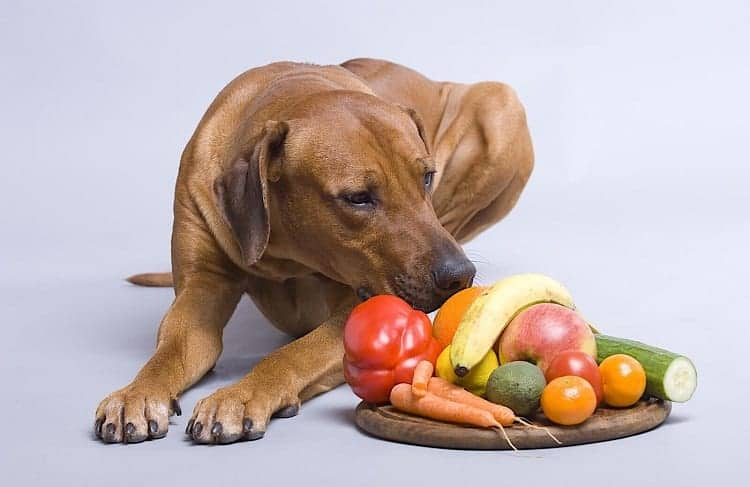 What To Know About Dog Health