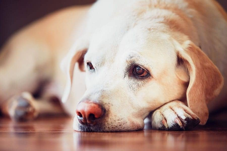Dog Vomit: Types, Causes And When Should You Worry