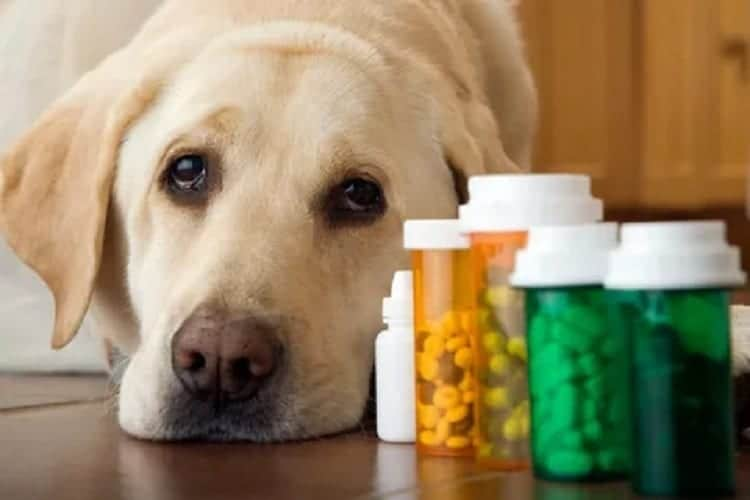 How To Treat Mental Health Conditions In Dogs