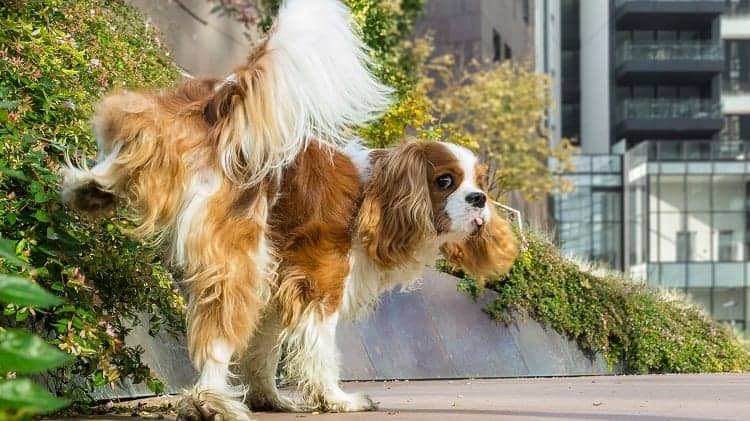What To Know About Urine Colors In Your Dog
