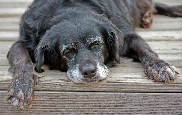 Why You Should Treat Your Dog's Constipation ASAP