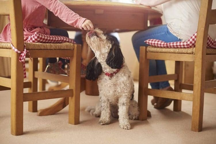 You Feed Your Dog Table Scraps