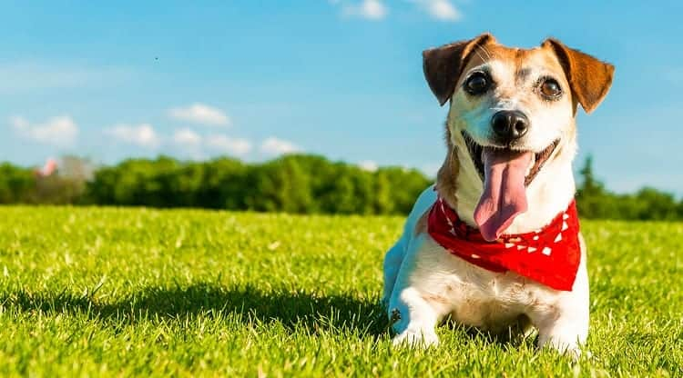What Are Some Signs That Your Dog Is Healthy?
