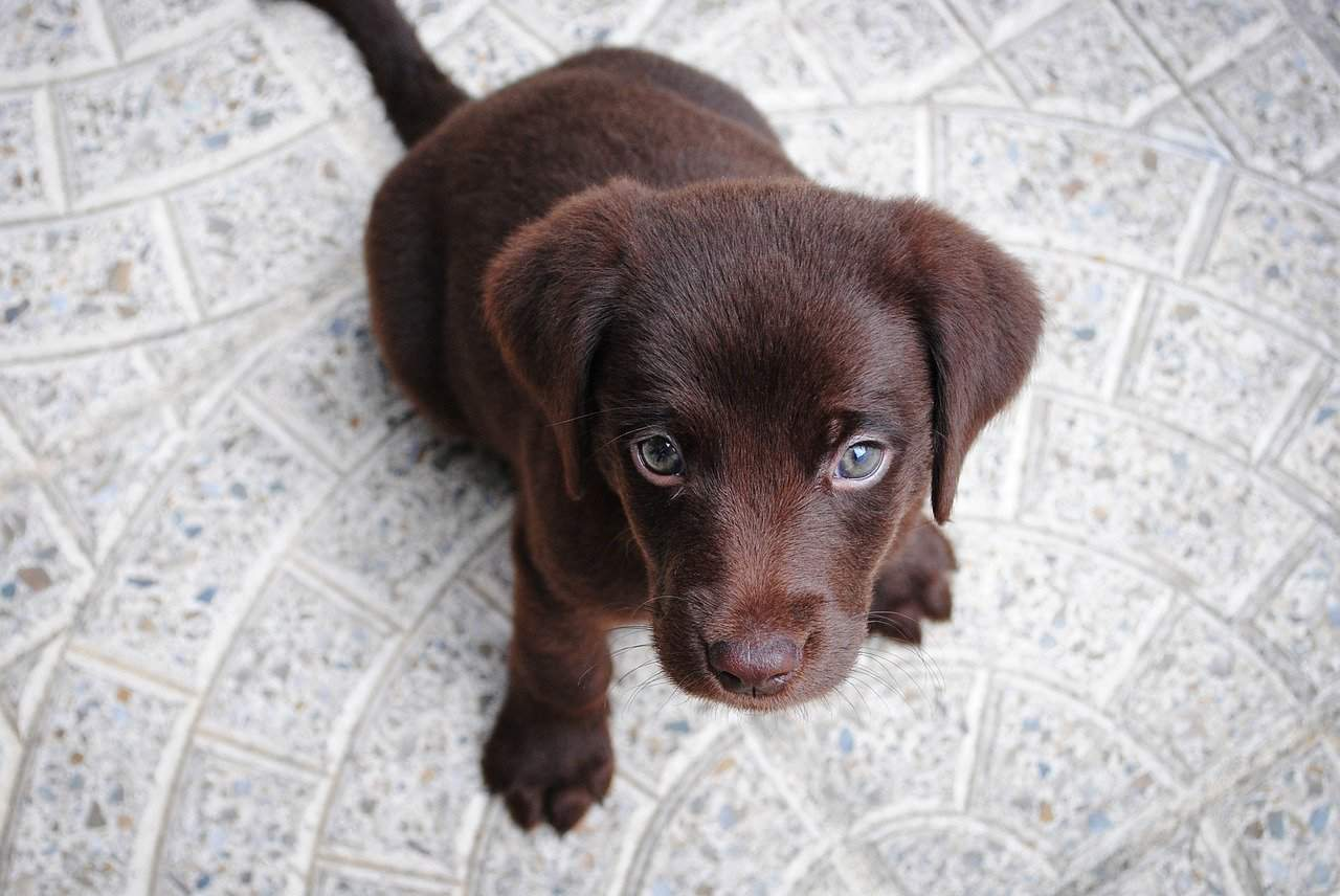 puppy looking on expectantly
