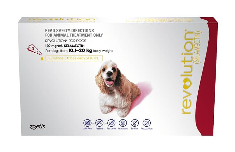 Common Medications For Puppy Parasites