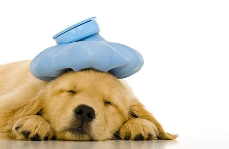 Are Puppies Prone To Getting Urinary Tract Infections?