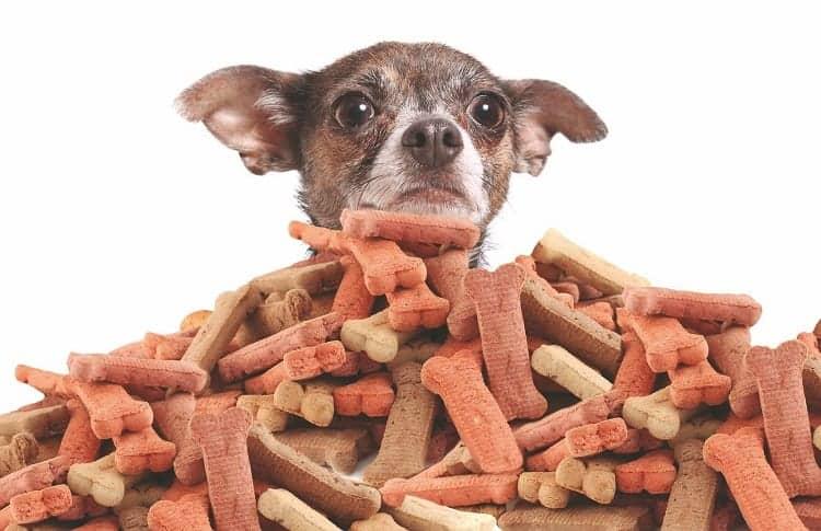 You're Feeding Your Dog Too Many Treats