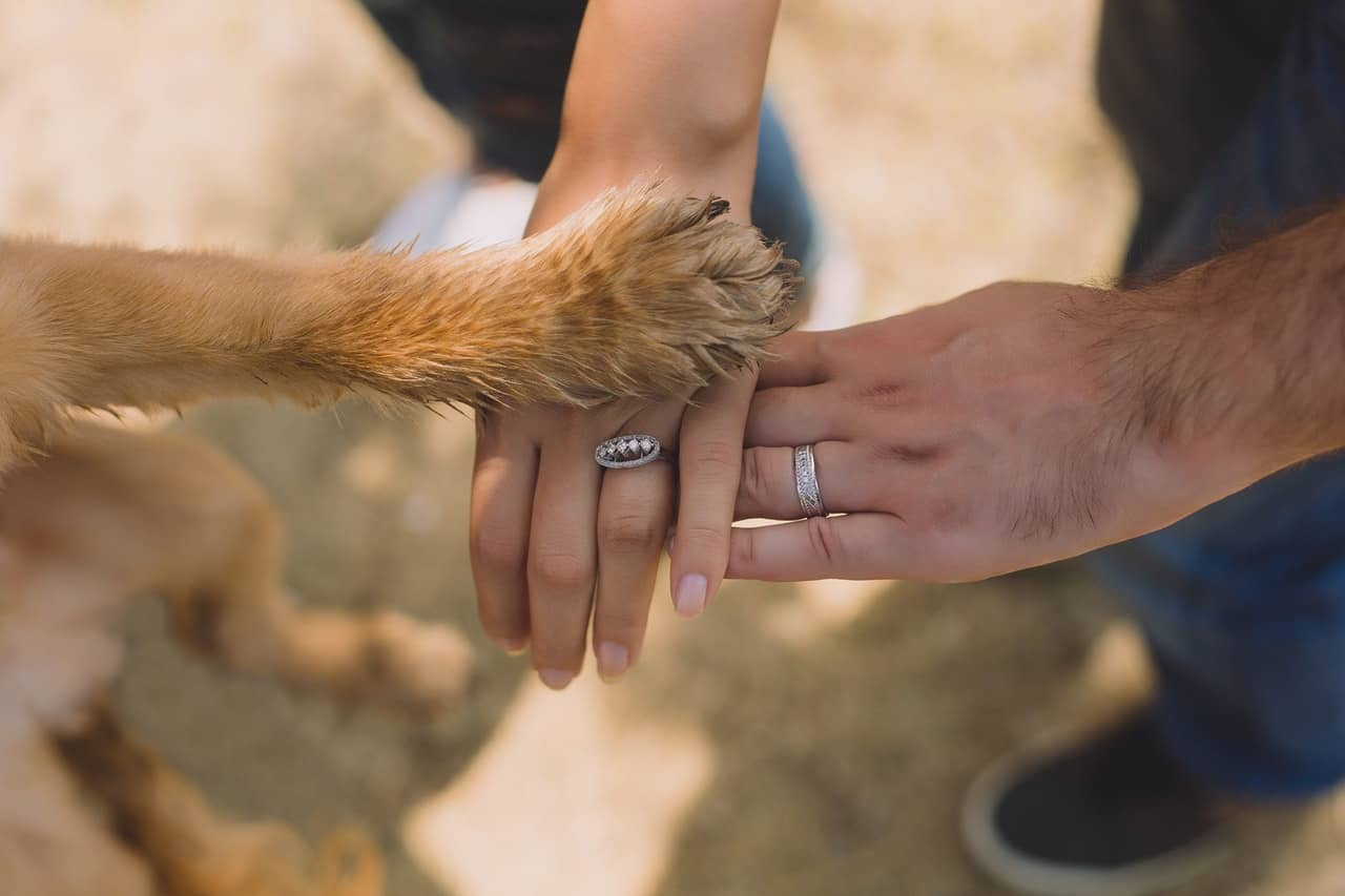 Dog paw on top of human hands